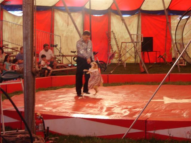 Alain Zerbini Circus 2006
